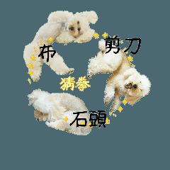 おうちプードルの中国語繁体でジャン犬ポン