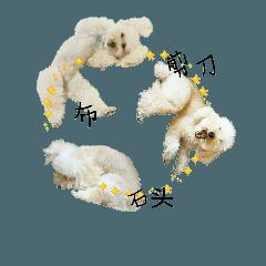 おうちプードルの中国語簡体でジャン犬ポン