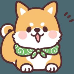 ころころ柴犬4