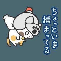 わんにゃいと騎士団(株) ~猫と犬の騎士~