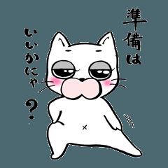 ファンタスティックな白い猫