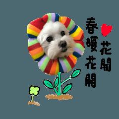 Chang Haru
